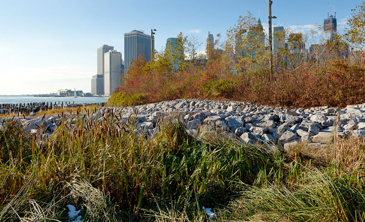 A salt marsh on Pier 1 that was innundated  during Superstorm Sandy. Courtesy Brooklyn Bridge Park / Etienne Frossard