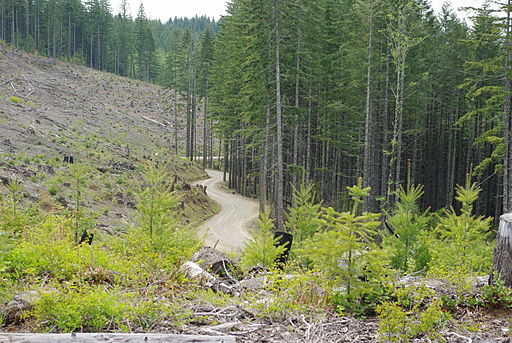 Northern_Oregon_Coast_Range_logging_road_-_Washington_and_Yamhill_counties,_Oregon