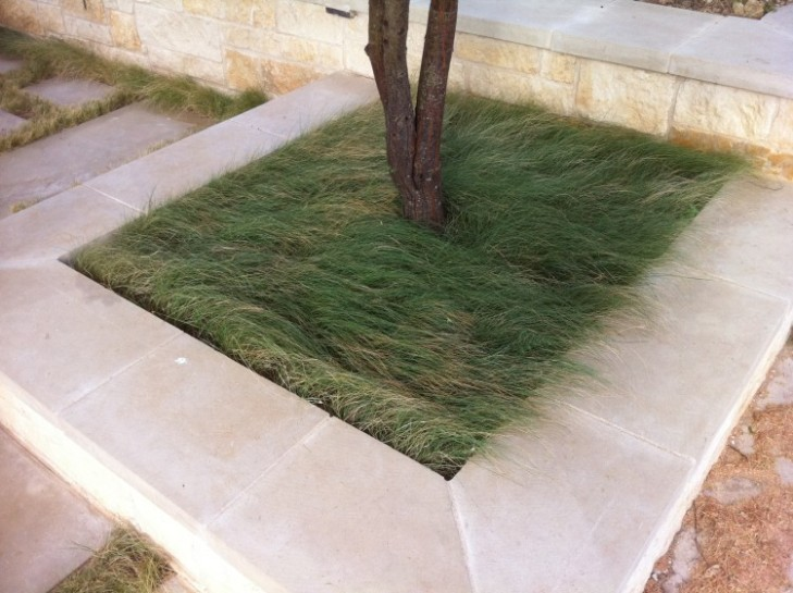 "Unmown ""Habiturf"" looks soft and slightly tousled. Photo: Mark Simmons, Lady Bird Johnson Wildflower Center."
