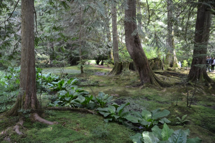 The Moss Garden (fox habitat) at Bloedel Reserve. Credit: Daniel Jost.