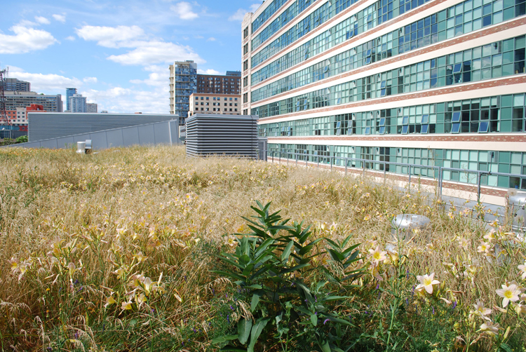 Extensive Vegetated Roofs Xero Flor Green Roof System From