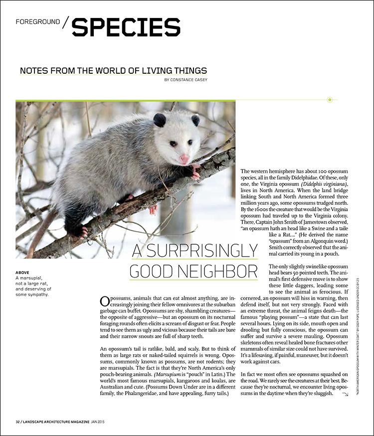 A SURPRISINGLY GOOD NEIGHBOR | Landscape Architecture Magazine