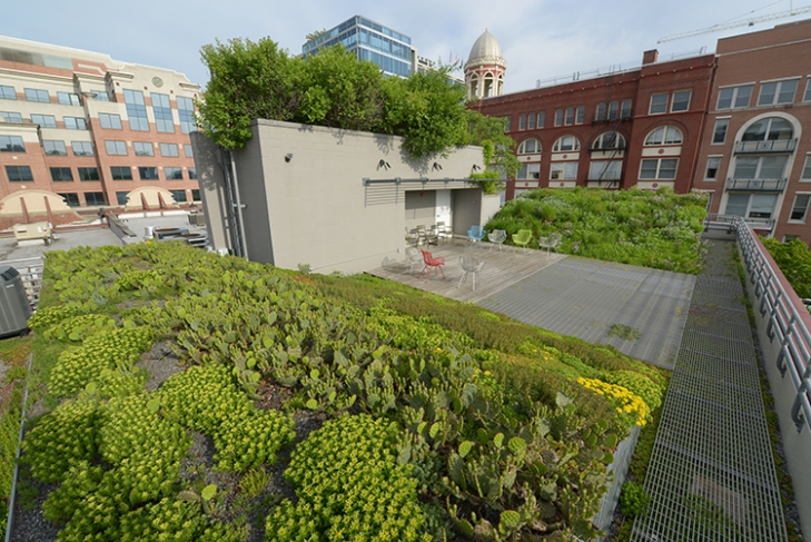 After 10 years of evolution, the green roof of the American Society of Landscape Architects is producing a new and varied crop. Photo courtesy of the American Society of Landscape Architects.