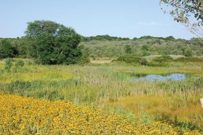 BEDIT_F3-Canton_Norman_Wetlands and Black-Eyed Susans