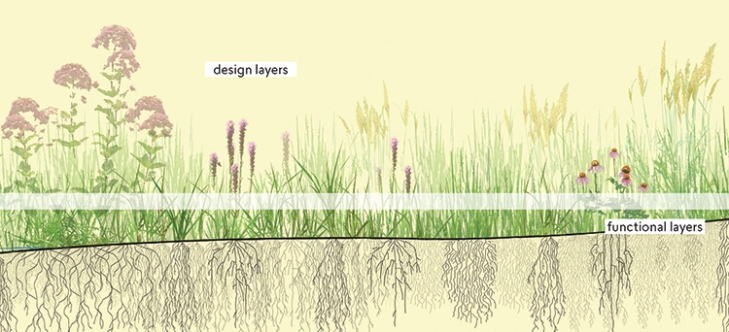 "Designed plant communities are composed of ""design layers"" that provide the primary aesthetic interest, and ""functional layers: that perform essential functions such as erosion control, soil building, and weed suppression."