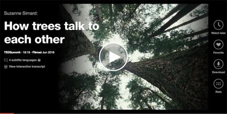 BEDIT_LAMCast-TEDTreeTalk