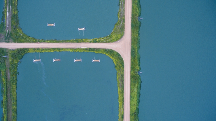 bedit_f4-catfish_pond_planview