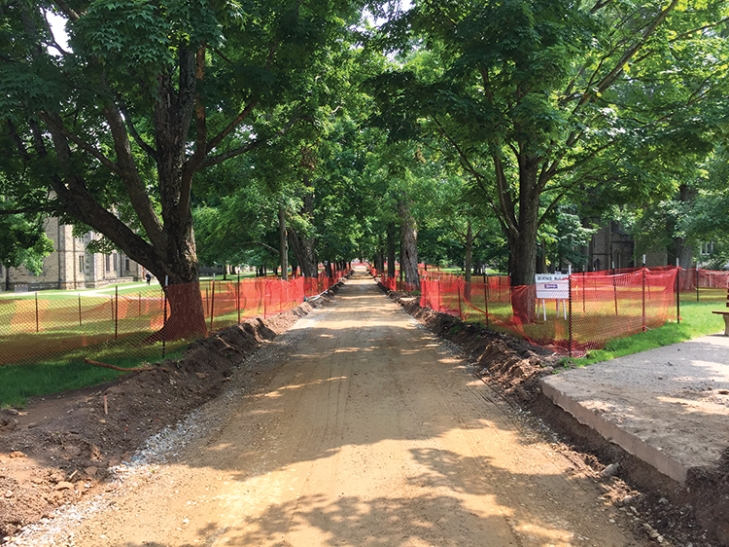 Preservation of the sugar maple allée was essential. Relatively few roots were disturbed during removal of the existing path. Photo by Neil Budzinski.
